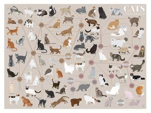 Cats - Categorized