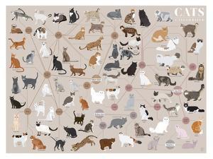 Cats - Categorized