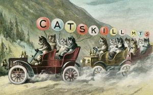 Cats in Cars, Catskill Mountains, New York