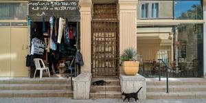 Cats on the steps of a clothing store, Downtown Haifa, Haifa, Israel