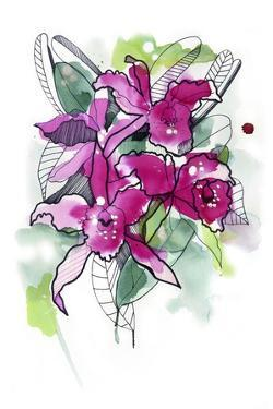 Magenta Orchids by Cayena Blanca