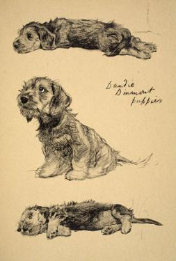 Dandie Dinmont Puppies, 1930, Just Among Friends, Aldin, Cecil Charles Windsor by Cecil Aldin