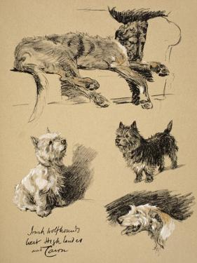 Irish Wolfhound, West Highlander and Cairn, 1930, Just Among Friends, Aldin by Cecil Aldin