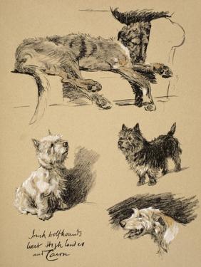 Irish Wolfhound, West Highlander and Cairn, 1930, Just Among Friends, Aldin by Cecil Aldin