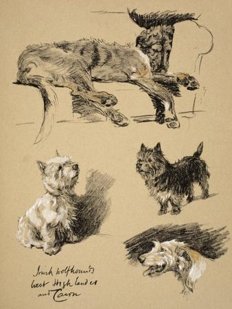 Irish Wolfhound, West Highlander and Cairn, 1930, Just Among Friends, Aldin
