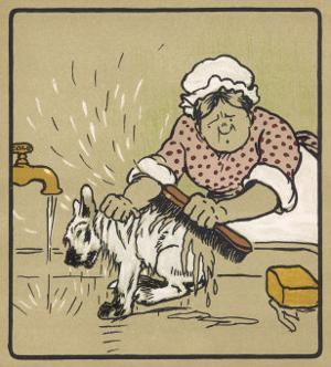 Little White Dog is Washed Under the Cold Tap - He's Not Very Happy About It! by Cecil Aldin