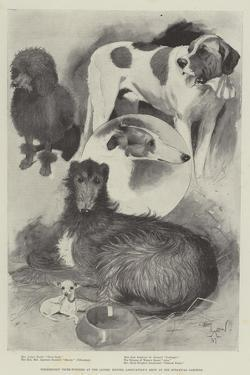 Premiership Prize-Winners at the Ladies' Kennel Association's Show at the Botanical Gardens by Cecil Aldin