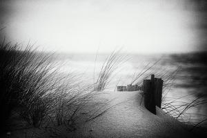 You will Return to Silence by Cecy Jup
