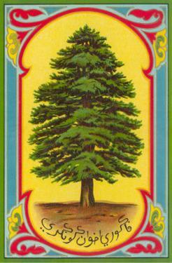 Cedar of Lebanon, Arabic Script