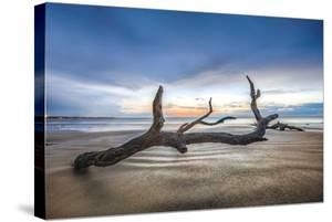 Bones Beach by Celebrate Life Gallery