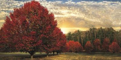 Crimson Trees by Celebrate Life Gallery