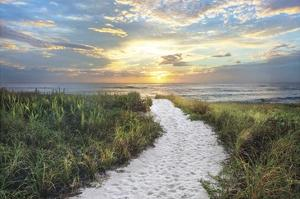 Morning Trail by Celebrate Life Gallery