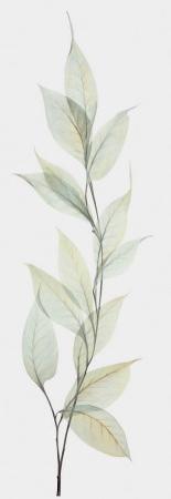 Celosia Silhouette
