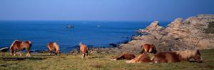 Celtic Horses on the Shore, Finistere, Brittany, France