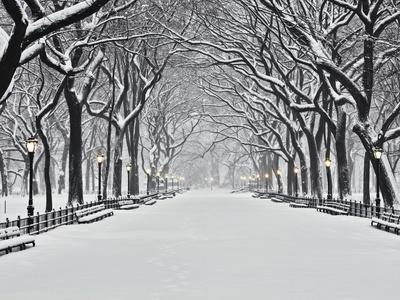 https://imgc.allpostersimages.com/img/posters/central-park-in-winter_u-L-PZLFSA0.jpg?p=0
