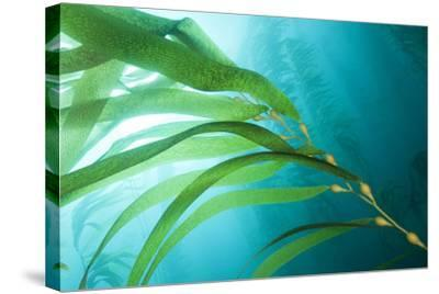 A Kelp Forest by Cesare Naldi