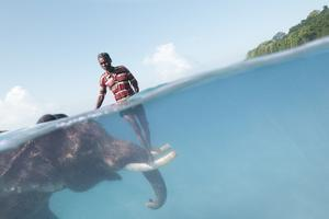 A Mahout, Balances Himself on the Tusks of Rajan, the Elephant, in the Andaman Islands by Cesare Naldi