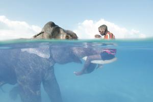 A Mahout, Sits on the Tusks of Rajan, the Elephant, in the Andaman Islands by Cesare Naldi