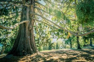 New Zealand, Commonwealth, Queenstown, Giant Sequoia, South Island by cgimanufaktur