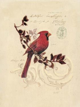 Filigree Cardinal by Chad Barrett