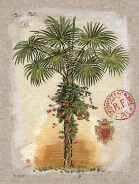 Linen Fan Palm Tree by Chad Barrett