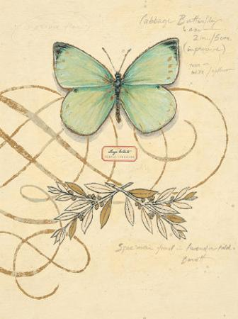 Scripted Papillon by Chad Barrett