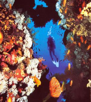 Challenge: Diver