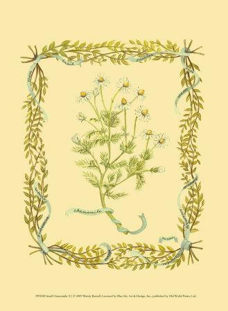 https://imgc.allpostersimages.com/img/posters/chamomile_u-L-F3LJ880.jpg?p=0
