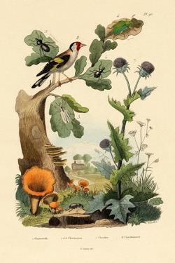 Chanterelle, 1833-39