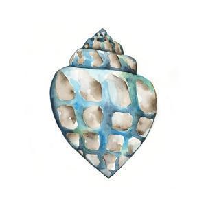 Aquarelle Shells V by Chariklia Zarris