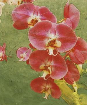 Island Orchid I by Chariklia Zarris
