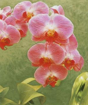 Island Orchid IV by Chariklia Zarris