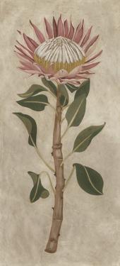 Protea I by Chariklia Zarris