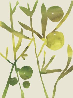 Spring Sprig III by Chariklia Zarris