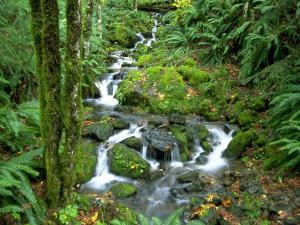 Waterfall at Mt. Rainer Rain Forest by Charles Benes