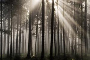 Austria Forest Light by Charles Bowman
