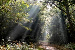 Autumn forest path, Surrey, England, United Kingdom, Europe by Charles Bowman