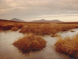 Caithness, Highlands Region, Scotland, UK, Europe by Charles Bowman