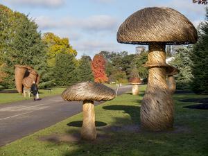 Kew Fungi by Charles Bowman