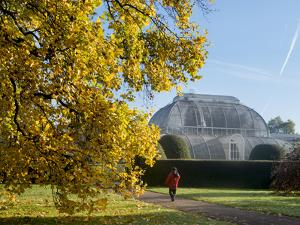 Kew Palm House Autumn by Charles Bowman