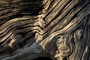 Wood by Charles Bowman