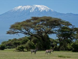 Zebra, Amboseli National Park, With Mount Kilimanjaro in the Background, Kenya, East Africa, Africa by Charles Bowman