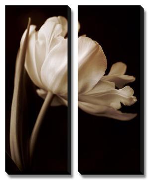 Champagne Tulip I by Charles Britt