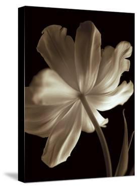 Champagne Tulip II by Charles Britt