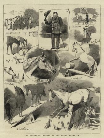 The Broncho Horses at the Royal Aquarium