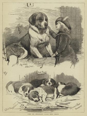 The St Bernard Club Dog Show