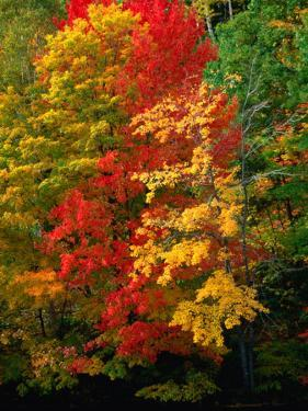 Autumn Colours in Marquette County, USA by Charles Cook
