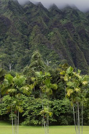 Cliffs of Koolau Mountains Above Palm Trees, Oahu, Hawaii, USA