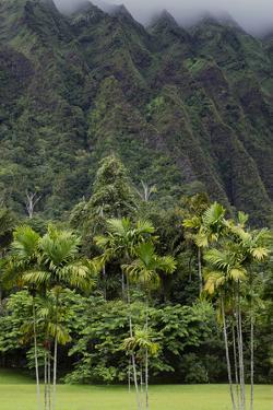 Cliffs of Koolau Mountains Above Palm Trees, Oahu, Hawaii, USA by Charles Crust