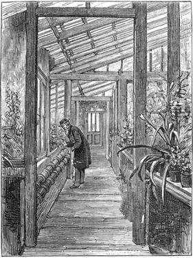 Charles Darwin (1809-188), English Naturalist, in His Greenhouse